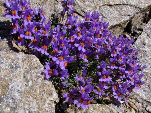 fiori tra i sassi