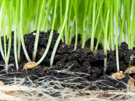 5 Quaresima (B) Se il chicco di grano caduto in terra muore, produce molto frutto (Gv 12,20-33)