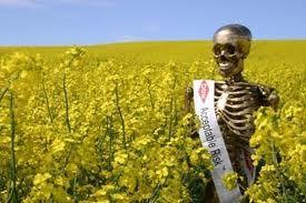 Monsanto derrière des milliers de suicides parmi les producteurs de coton