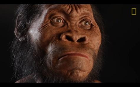 Homo-naledi-un-nouvel-hominide-decouvert-en-Afrique-du-Sud_article_main