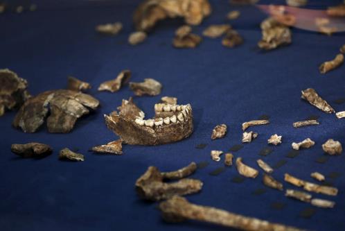 Resti fossili di Homo naledi ritrovati nei dintorni di Johannesburg