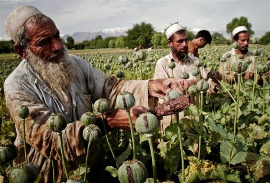 """La """"nuova guerra dell'oppio"""", tra ISIS e taleban."""