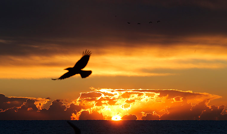 Cannes, France: A bird flies as the sun rises over the bay
