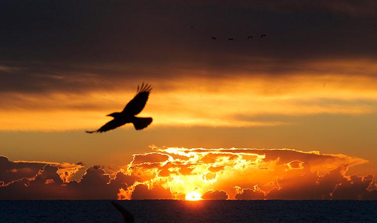 Cannes, France: A bird flies as the sun rises over the bay