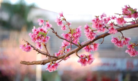 26. L'albero del frutto dell'obbedienza