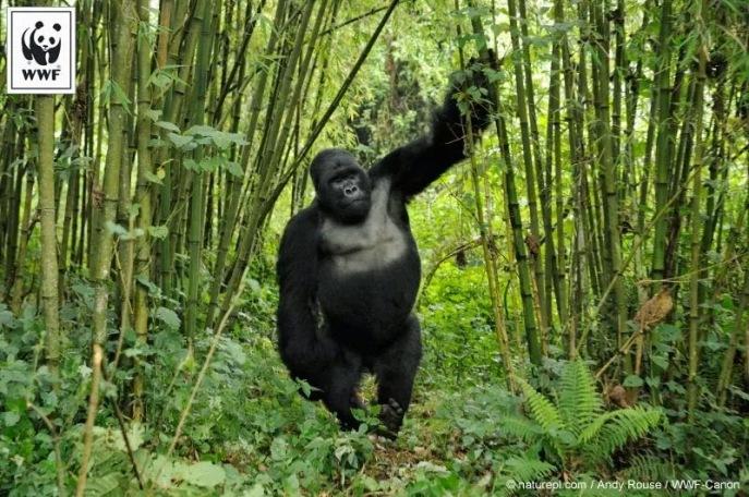 Parc des Virunga.jpg