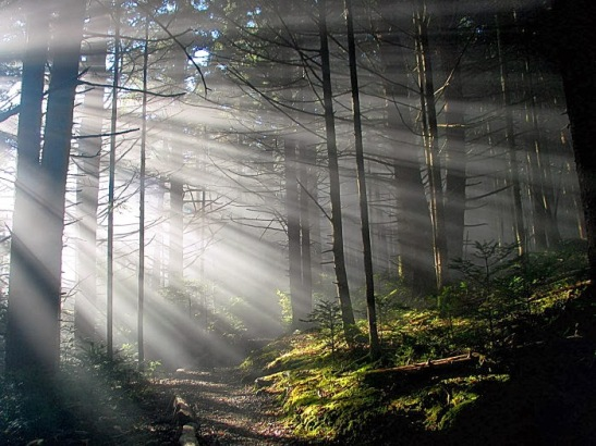 Shed light upon me with the rays of your mercy,