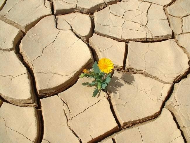 Esperança, apesar do absurdo1
