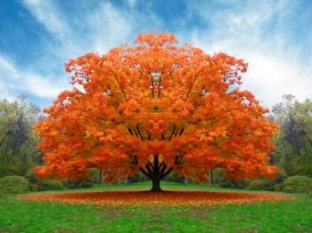 outono-e-ocaso-da-vida