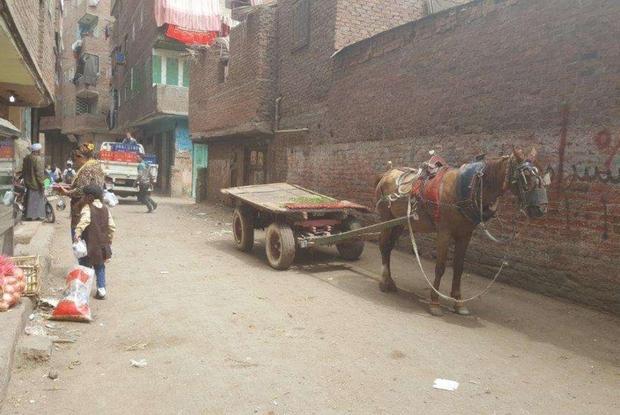 Cairo, sopravvivere (da cristiani) nel quartiere discarica7