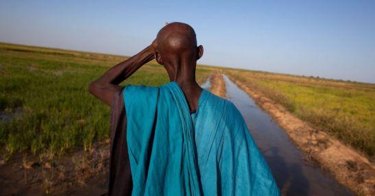 Stop all_accaparramento di terre per zucchero e biocarburanti in Tanzania