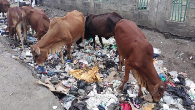 Adeus, sacos de plástico: Quénia interdita fabrico e uso de sacos de polietileno