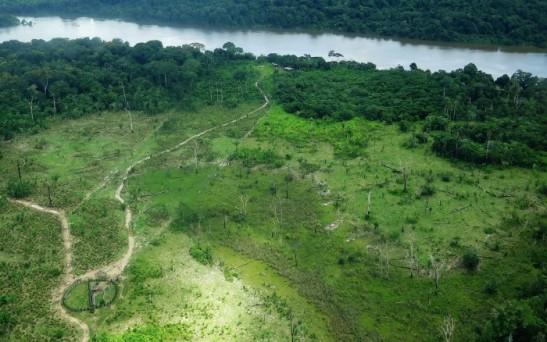 Morte da floresta.jpg
