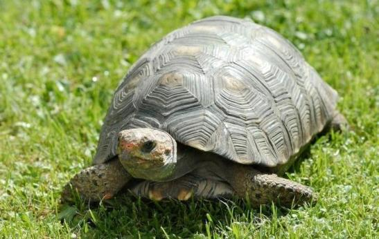 Oral Literature. The tortoise and the drum