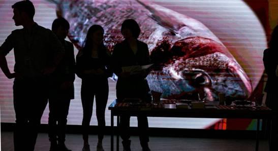 Imagen de un pez en la 72ª asamblea de la Organización Mundial de la Salud. A. TARDY OMS