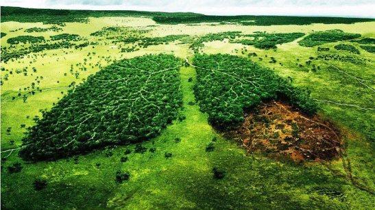 Amazzonia in pericolo