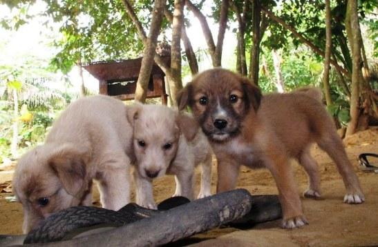 Hund Welpe Puppy Puppies