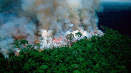 El CELAM levanta la voz por la Amazonía