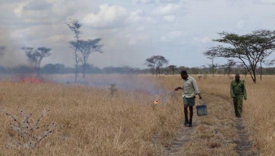 Fire grasslands
