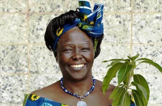Wangari Maathai, Freedom Fighter