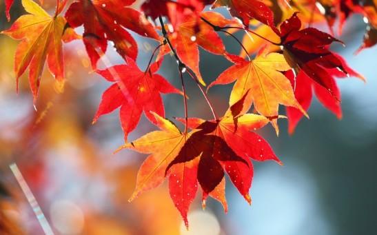 autunno della vita