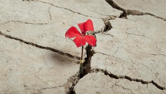 Résilience et persévérance !