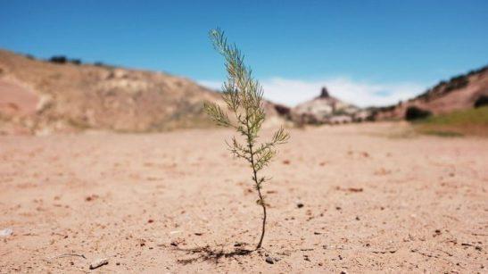 Effetti della desertificazione (2019 Getty Images)
