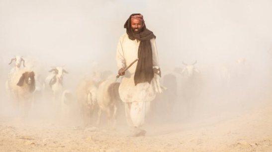 good-shepherd1