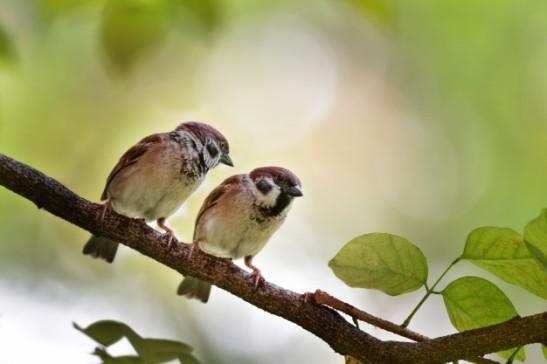 due-passeri-si-sono-appollaiati-su-un-ramo-di-albero-e-copiano-lo-spazio-per-testo-e-presentazione_35063-281