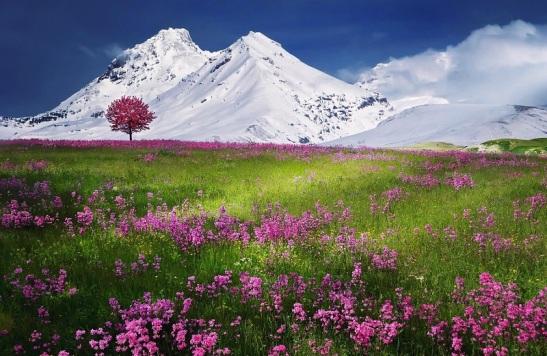 Ravasi - Il giardino del mondo e il suo Artefice